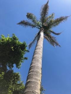 椰子の木.jpg